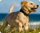 Dog friendly holiday cottages - puppy on a beach
