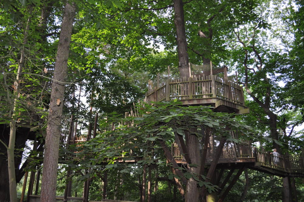 Some of the walkways in the trees at BeWILDerwood