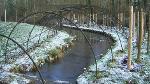 Boarstall Duck Decoy in Buckinghamshire